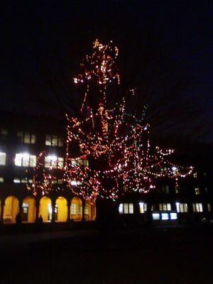 東大クリスマスツリー
